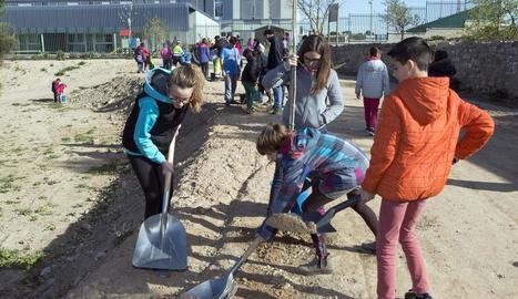 Els estudiants de Cervera van plantar ahir arbres al nou parc natural de la ciutat.