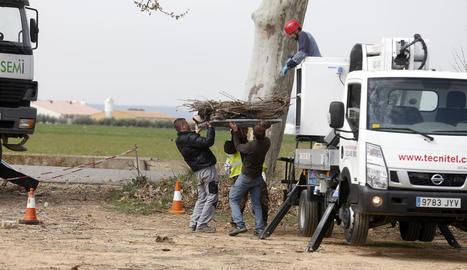 Els tècnics van retirar un niu abans de col·locar el mecanisme.