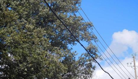 Imatge dels cables al costat dels arbres a Àger.