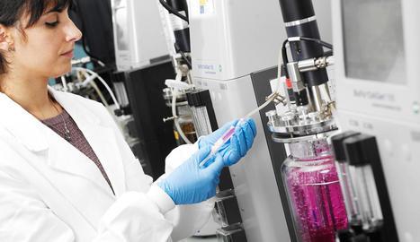 Amparo Gotor Vila, treballant al laboratori.