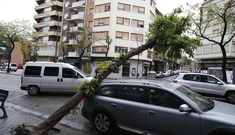 Cau un arbre sobre un cotxe estacionat a Prat de la Riba