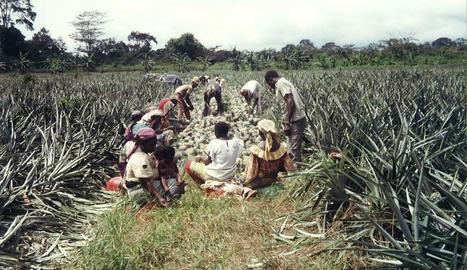 famílies. Les dones s'emportaven els seus fills a la plantació tot i la presència de serps verinoses.