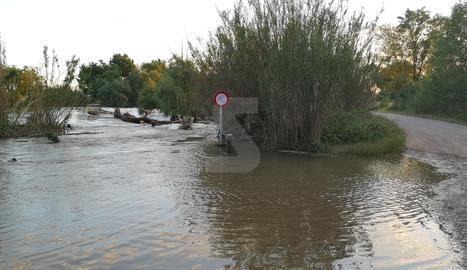 La crescuda del Segre també ha inundat camins a la partida de Butsènit.
