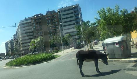 Un ruc enmig de Lleida