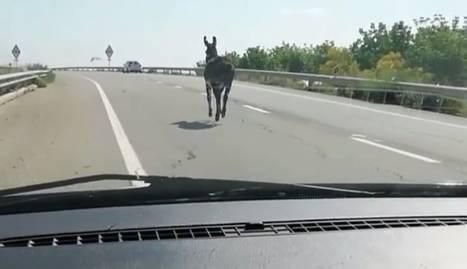 L'animal ha arribat fins al passeig de Ronda de Lleida.