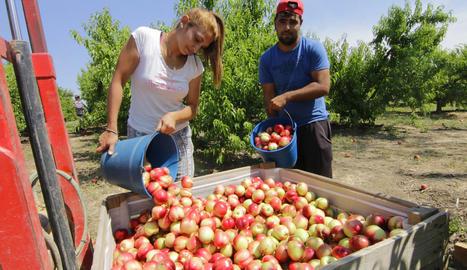 Imatge de recol·lecció de nectarines al Baix Segre l'any passat.