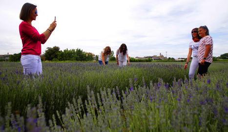 Primera edició de la fira de Floració de la lavanda a l'Horta