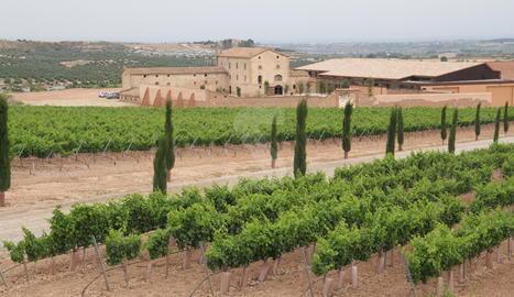 Vista de les vinyes i el celler de Torres a Les Garrigues.