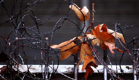 'Fulles presoneres' és el títol de la foto d'Antoni Joan Tolmos.