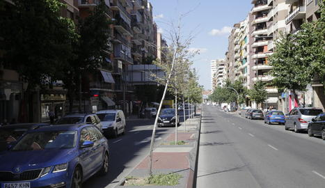 Arbres morts a la mitjana d'avinguda Madrid, on van ser plantats el mes d'abril.