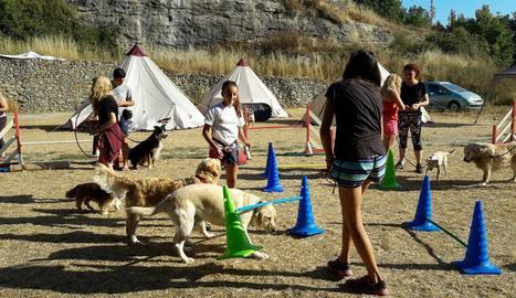 Nens realitzant una de les activitats programades amb els gossos.
