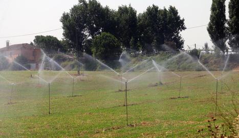 Imatge d'una plantació farratgera amb reg per aspersió a Almenar.