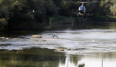 L'helicòpter de fumigació, fent una passada per un tram del riu Segre a Rufea.