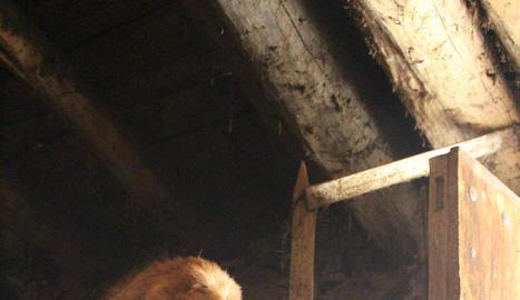 llessui. L'activitat Aviem el Bestiar acaba amb un dinar en un prat proper a Llessui. Si volen més informació sobre aquesta i altres activitats del museu poden trucar a 973 621 798.