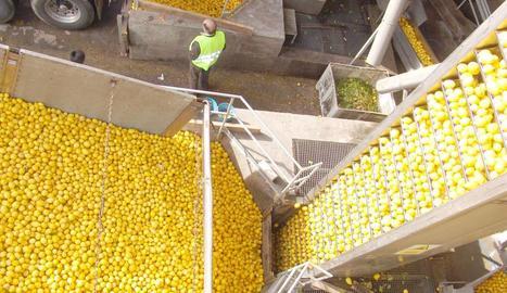 Imatge d'Indulleida, l'empresa de producció, entre altres, de sucs de fruites i verdures.