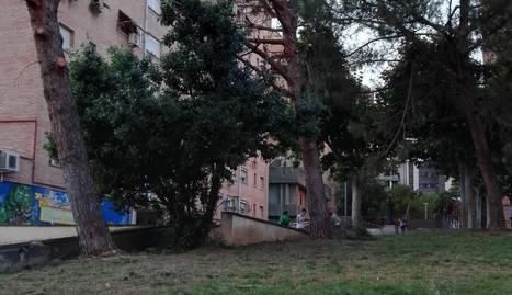 Queixes per la tala de grans pins a Pius XII