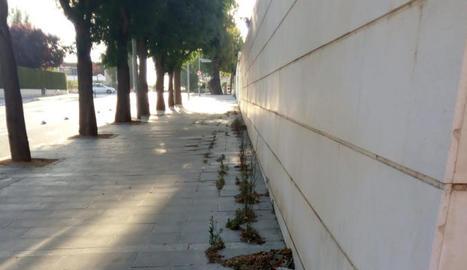 Els veïns critiquen la brutícia i la falta de cura dels carrers.