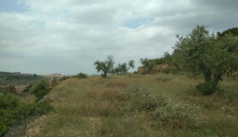 Els terrenys on projecten el càmping de l'Albagés (esquerra) i una vista aèria de la presa de l'Albagés (dreta) a finals de l'any passat
