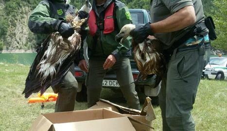 Les aus van ser traslladades al centre de fauna de Vallcalent.