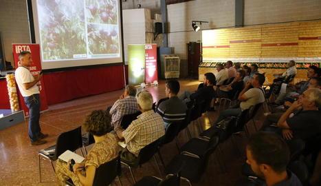 Un moment de la 22 exposició de l'IRTA de noves varietats de fruita de pinyol a Gimenells