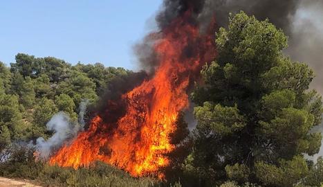 Incendi a Juncosa per una crema agrícola no autoritzada