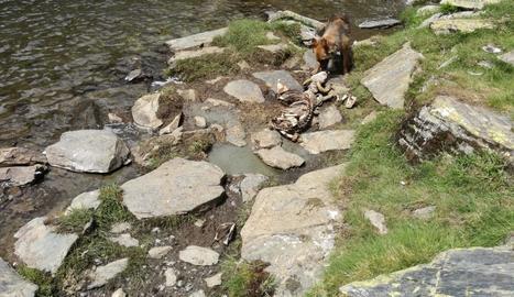Imatge de l'ovella morta al límit entre el Sobirà i França.
