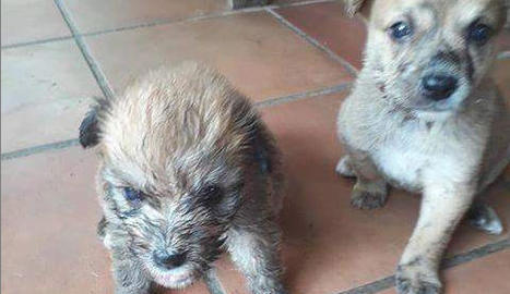 Imatge dels dos cadells que van tirar a un contenidor de brossa.