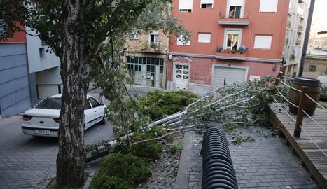 Imagen del árbol caído en el cruce de la calle la Mesquita con la plaza Aurembiaix d'Urgell.