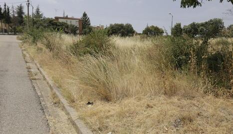 Solars amb vegetació seca a Sant Josep de Fontdepou.