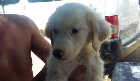 Imatge d'un dels cadells que van poder rescatar.
