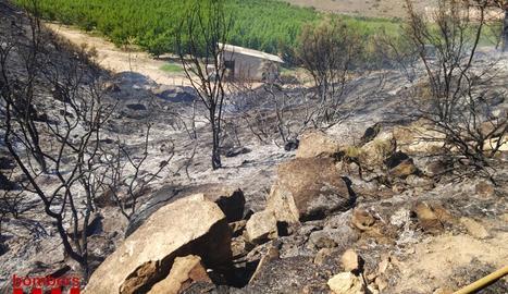 El foc s'ha originat entre un camí i un camp de cultius a la zona de la Velleta de Joaquima