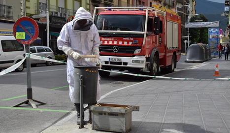 El bomber que es va encarregar de retirar les abelles a la Seu.