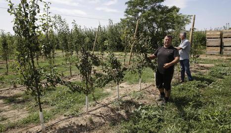 Els agricultors mostraven ahir els danys provocats a la finca, amb arbres talats.