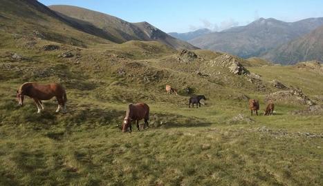 Imatge dels 29 cavalls pastant en una muntanya d'Espui.