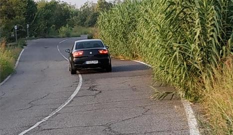 Queixes per les males herbes - L'associació de veïns del Camí de la Mariola va criticar ahir la proliferació de males herbes i arbustos en algunes carreteres de la partida, que poden provocar distraccions i accidents, i demanen a l'ajuntame ...