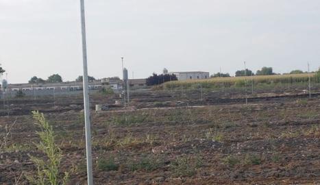 La zona on es van aplicar els residus compostats.