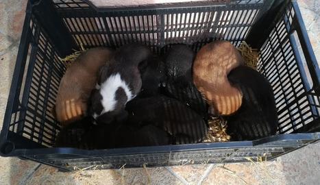 Imatge dels cadells a la caixa en la qual els van abandonar.