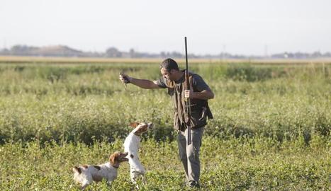 Un caçador i els seus gossos durant la primera jornada de la mitja veda a Lleida el 15 d'agost passat.