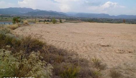 Imatge de la zona llaurada i preparada per a cultiu.