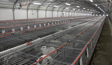 Imatge d'arxiu d'una granja de conills.