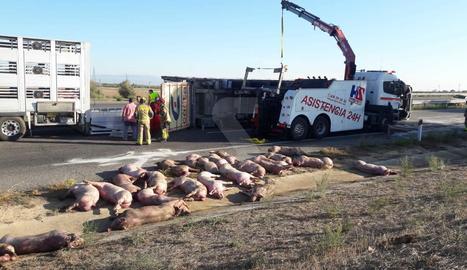Una trentena dels animals ha mort.