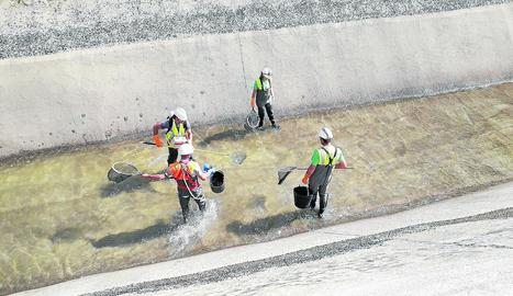 Tècnics duent a terme el rescat amb pesca elèctrica.