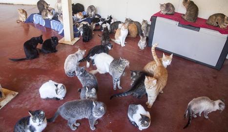 Diversos gats de carrer acollits per una ciutadana.
