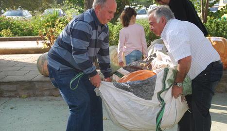 Les carabasses gegants arriben d'arreu de Catalunya i també de fora.