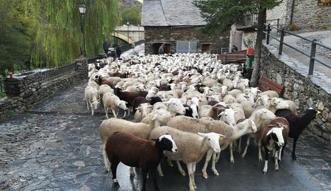 Descens de l'agrupació de bestiar de Boldís-Àreu.