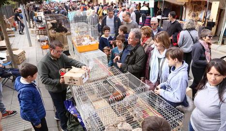 Una parada de perdius a la Fira de la Perdiu de Vilanova de Meià, que va reunir més de 140 expositors.