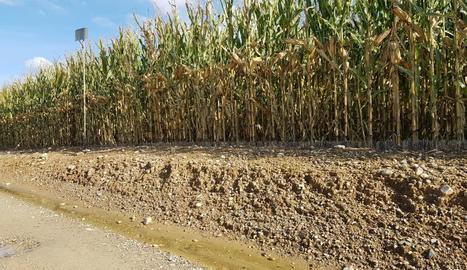 Imatge d'un dels camps en els quals s'aprecien problemes per l'excés d'aigua a Gimenells.