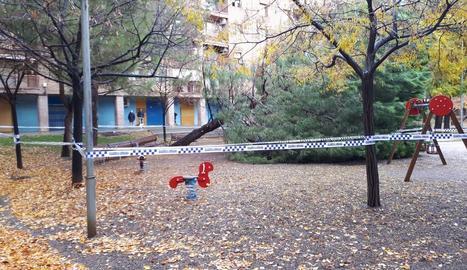 Imatge de l'arbre que va caure ahir al parc Joc de la Bola de la ciutat de Lleida.