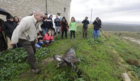 L'alliberament ahir a Mas de Melons va ser obert al públic per conèixer de prop aquesta espècie.