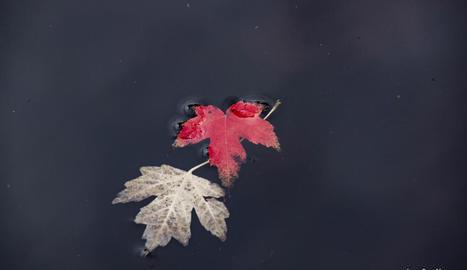 Imatge de dos fulles surant sobre l'aigua, foto de Jaume Roca.